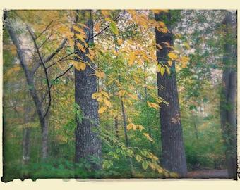 Autumn trees fall foiliage stock photo image free use