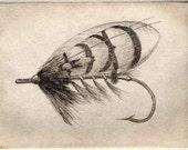 Fly Fishing fishing fly etching  June Bug