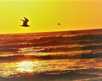 Beach Flyer sea gull sunset digital Image 8 by 10 print