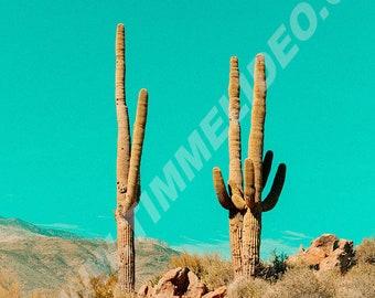 Arizona Saguaros Vintage Inspired Desert Photo Print