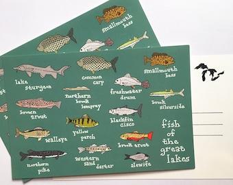 Great Lakes Fish Postcard Set - 3, 5, 10 Michigan MI OH Ohio Illinois IL Pennsylvania Indiana Wisconsin Minnesota Ontario Souvenir Souvenir