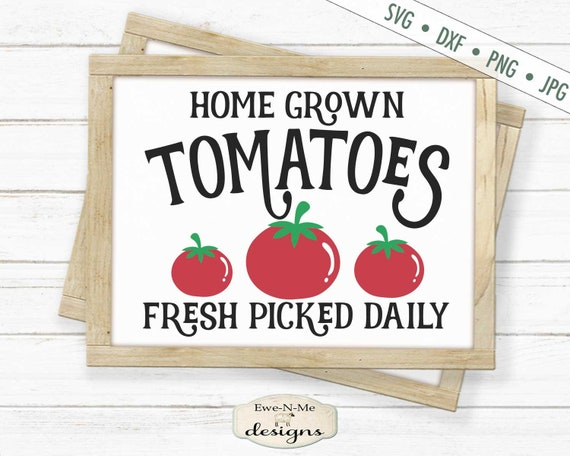 Home Grown Tomatoes - Picked Fresh SVG
