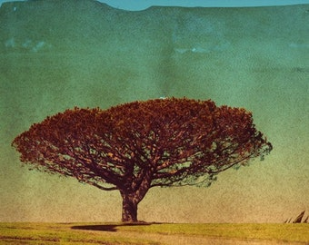 There was a large tree on a hill... - 11x14 Original Signed Fine Art Photograph