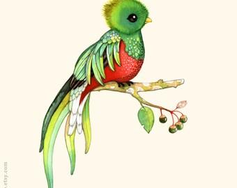 Alphabet print, ABC animals, bird print, bird watercolor painting, bird illustration, alphabet animal, Nursery wall art, French ABC, Quetzal