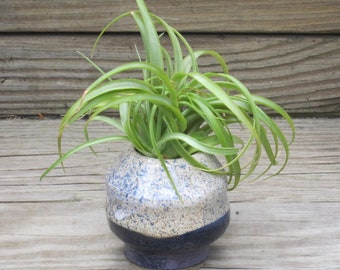 Mini-Vase with Air Plant - Air Plant Holder - Handmade, Wheel-Thrown Pottery - Pottery and Ceramics
