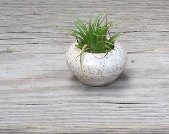 One Air Plant Vase with Air Plant - Green, Cream, or Golden Brown Mini-Vase, Handmade Ceramics, Wheel-Thrown Pottery