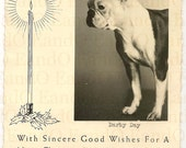 Vintage Photo Christmas Card 1940s 1950s Portrait of an American or French Bulldog