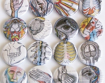 Vintage Anatomy Drawings 1 Inch Pinback Buttons - Set of Six (6)