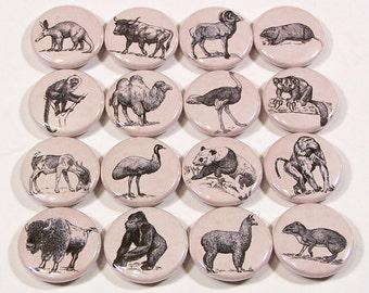 Vintage Animal Ephemera Drawings 1 Inch Pinback Buttons - Set of Six (6)