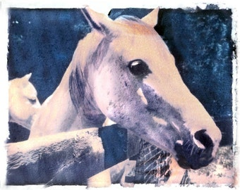 Photography White Horse in Barnyard Transfer Fine Art Photograph