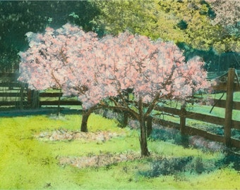 Cherry Blosson Orchard Photograph Print Japan relief