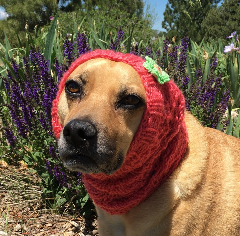 Hand knitted Winter Snood for Dog Winter Dog Snood with   Etsy