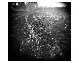 Cornfield No.1, Illinois