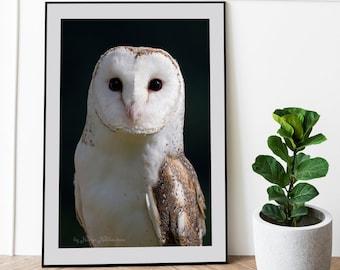 Barn Owl print - wildlife photography, Owl Wall Art, Owl decor, Scandinavian decor, moody art, owl gifts, bedroom wall art, wise owl poster