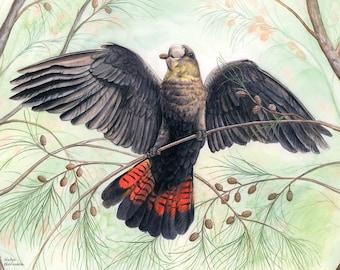 Glossy Black Cockatoo print - native bird print, Australian animal art, bird lover gift, nature wall art, Australian art Australian bird