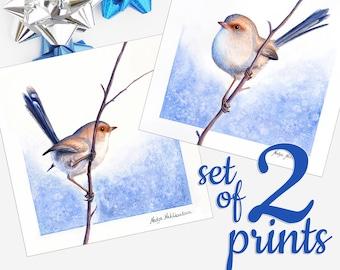 Fairy Wren print SET OF 2 - Australian bird set of 2 prints, female blue wren art, bird lover gift, native bird matching wall art gift idea