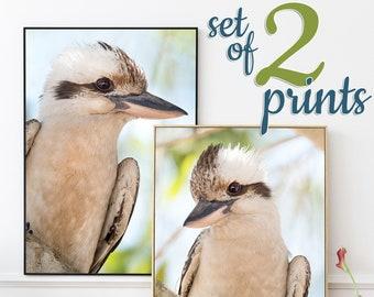 Kookaburra print SET OF 2 prints - Australian animal prints kookaburra picture matching wall art set Australian bird set of 2 nursery prints