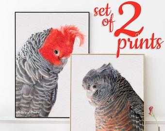 Gang Gang Cockatoo print SET OF 2 prints - parrot cockatoo wall art, grey and red matching wall art set, australian bird nature lover gift