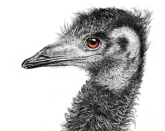 Australian Emu - Bird Fine Art print - Giclee Reproduction of Pen Ink Drawing, wildlife art, nature decor, Australian Art, black and white