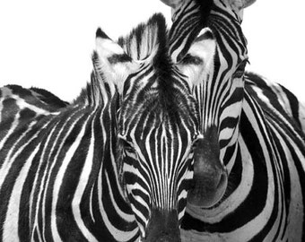 Two Zebras - black and white Zebra photo, zebra print, abstract zebra wall art, animal print, nursery wall art, African wildlife photography