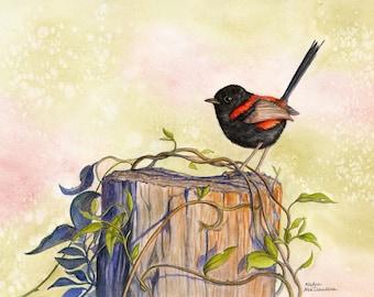 Red-backed Fairy Wren Print - Watercolour bird art Australian native bird print, bird lover gift, garden bird print, sage green nature print