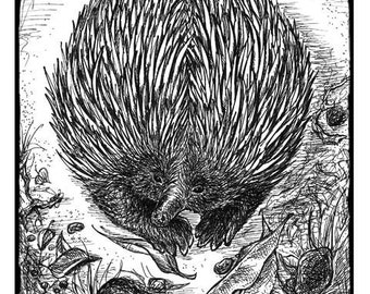 Echidna - Print of Pen and Ink Drawing - 8x10inches (20x25cm) - Australian wildlife animal art, black and white nature decor