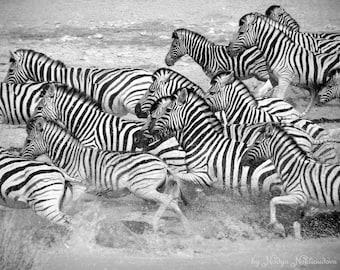 Zebra Flight - african wall art, wildlife photography, wild African animals, zebra wall art print, zebra print, zebra stripes, african print