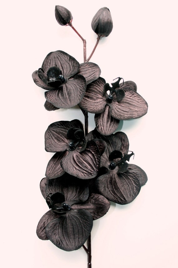 16 Inch Black Orchid Floral Stem Spray With 5 Orchids Plus Etsy