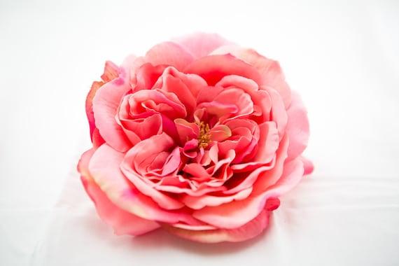 Large Pink Sophia Rose Artificial Flower Silk Flower Heads Etsy