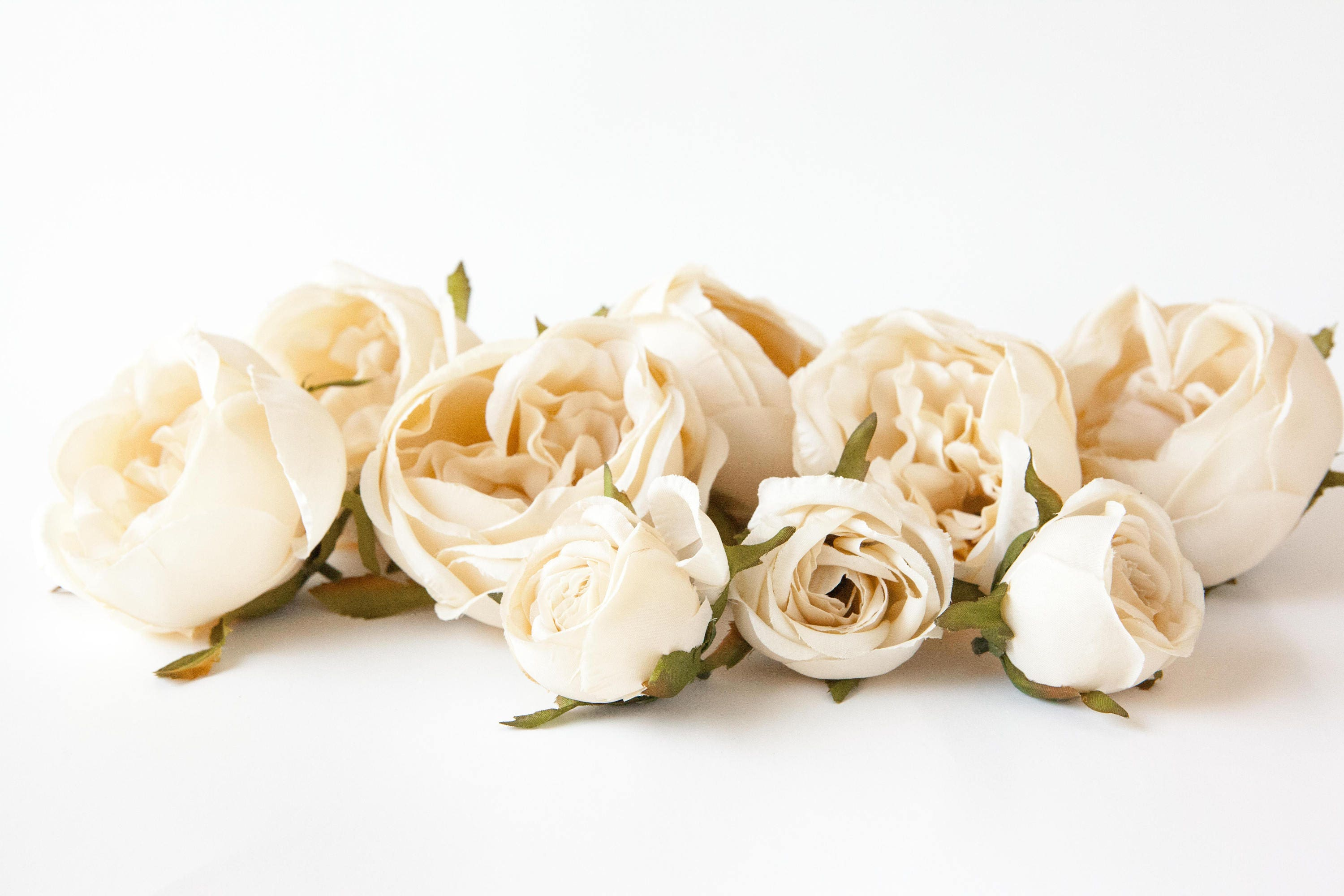 Set Of 9 Small To Large Cabbage Roses In Cream Flower Crown Etsy