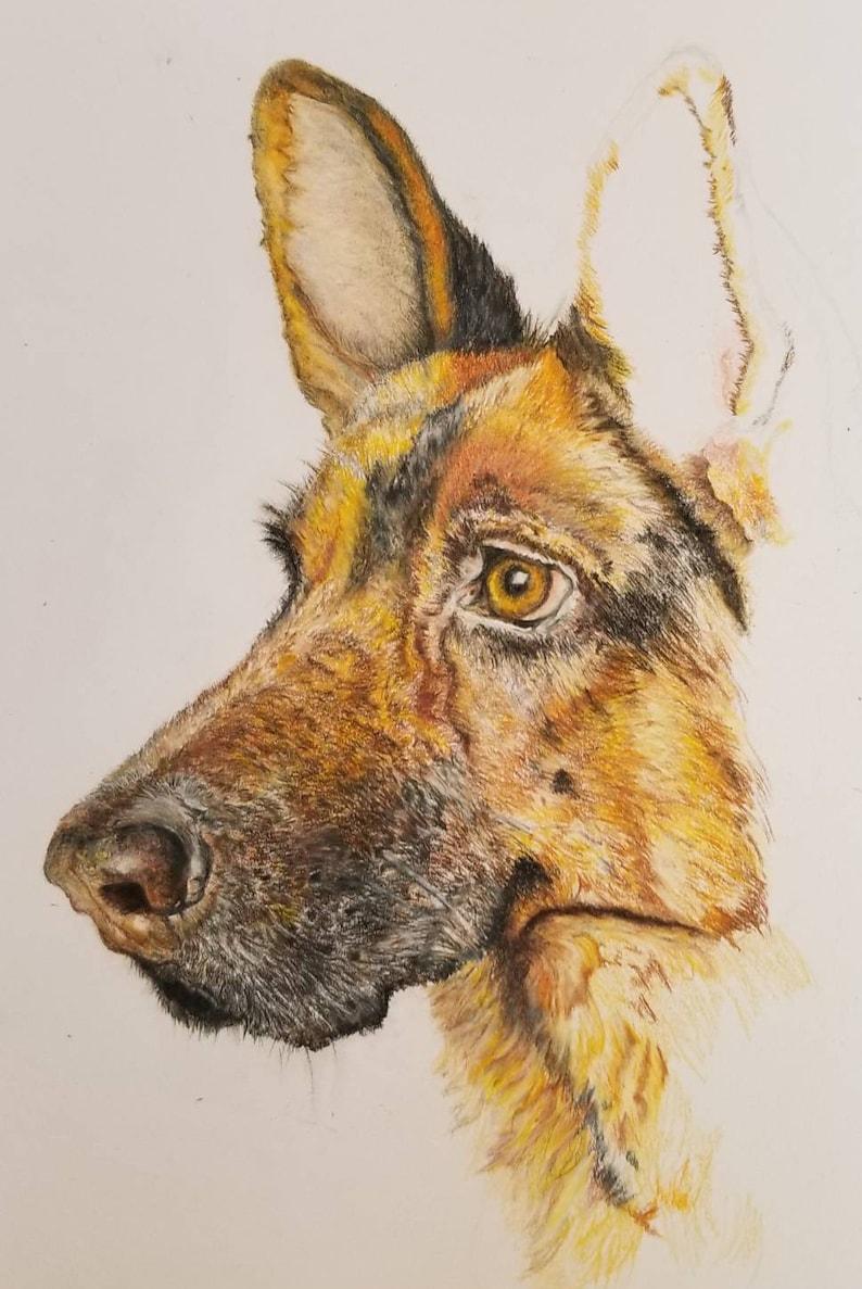 colored pencil print pet portrait German Shepherd Color Pencil Print dog lovers present dog drawing, pet lovers gift