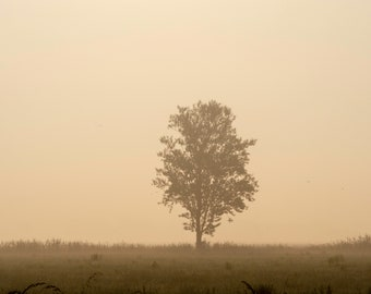Tree in the fog, Stock image, Photo for commerical use, Royalty Free Stock Photo for Social Media for bloggers, nature background