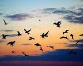 Inspiring Sunset Photograph, Flock of Seagulls Photo, Dramatic Wall Art, Purple Orange Blue Black, Modern Home Decor, Bird Silhouette Photo
