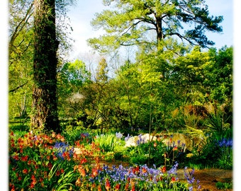 UNC-Chapel Hill Coker Arboretum