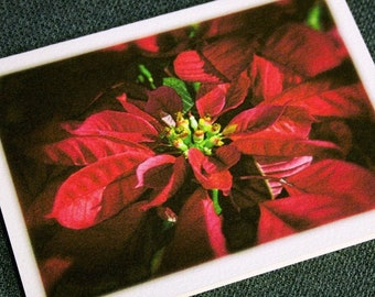 Poinsettia Christmas Cards