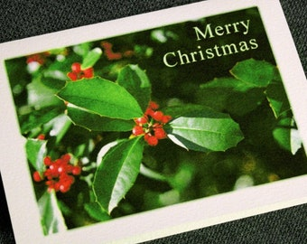Holly Christmas Cards