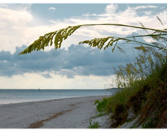 Sea Oats on Fort Macon Beach