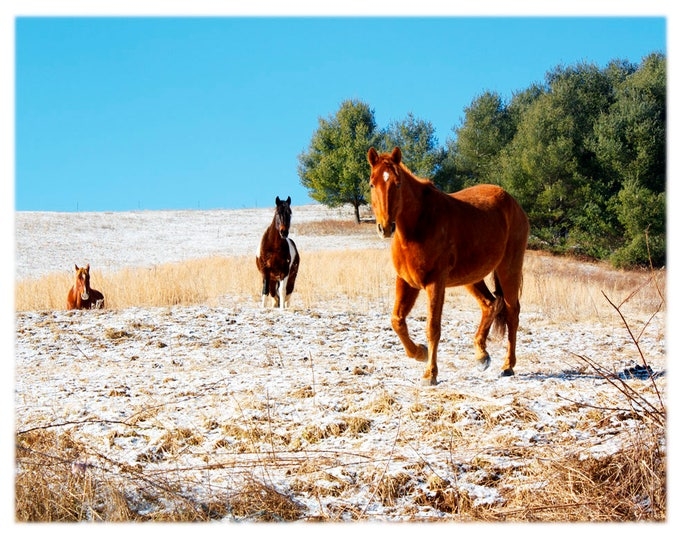 Featured listing image: Horse Pasture