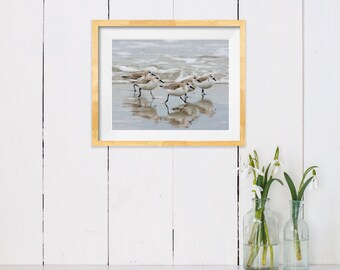 Sandpipers in the Surf