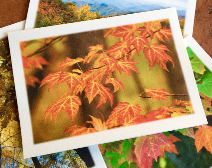 Featured listing image: The Autumn Leaves Collection