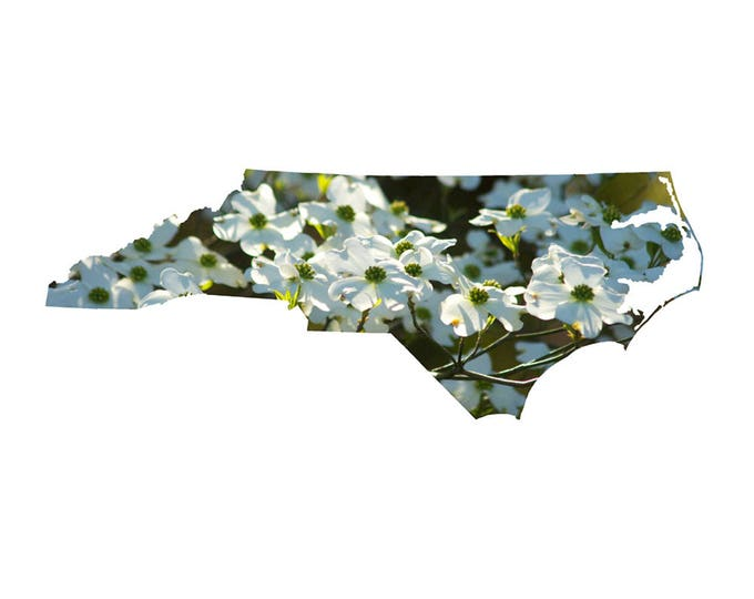Featured listing image: NC Shape - Dogwood Blossoms