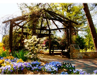 UNC-Chapel Hill Vine Arbor