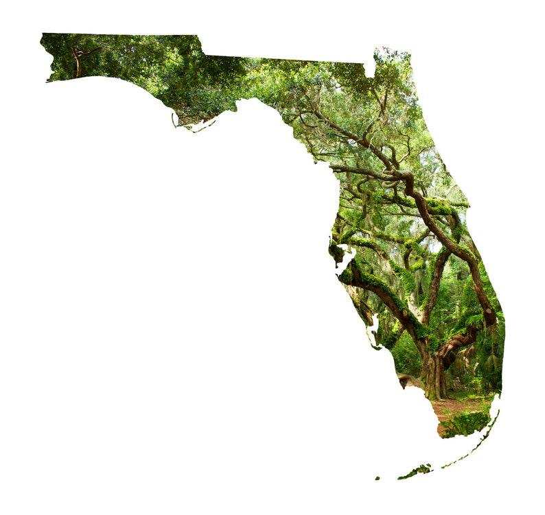 Amelia Island FL Coastal Photography Home Decor Fine Art Print or Note Cards Florida Map Art Landmark Oak