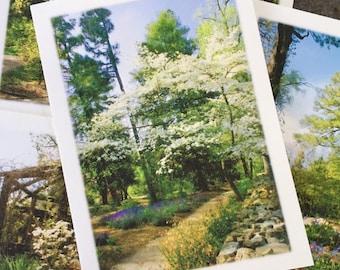 The UNC-Chapel Hill Coker Arboretum Collection