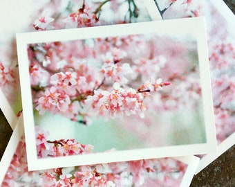 The Cherry Blossoms Collection