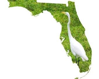 FL Shape - Great Egret
