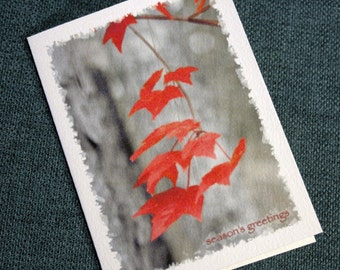 Red Maple Leaves Holiday Cards