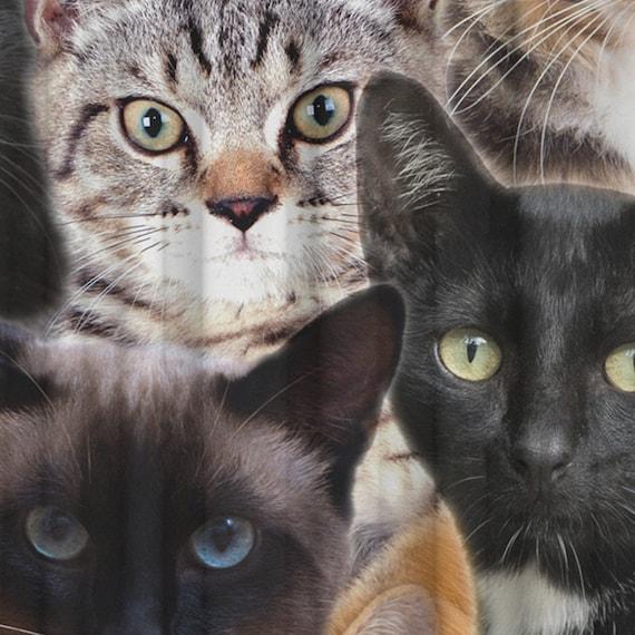 Fenster Vorhang Bad, lustige Vorhang, Katze Küchenvorhang, Katze  Schlafzimmer Vorhang, Katze Bad Vorhang, schwarz, Stoff, transparente Stoff,