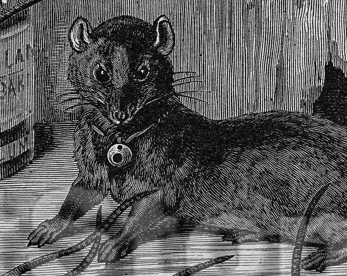 Rats download, from Victorian book illustration JPG TIFF PNG