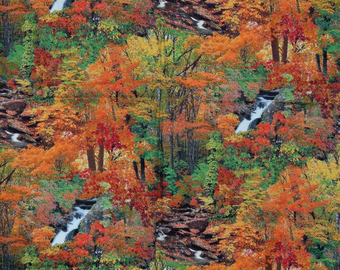 Quilting fabric with wooded forest, Fall leaves and trees, RJR fabrics